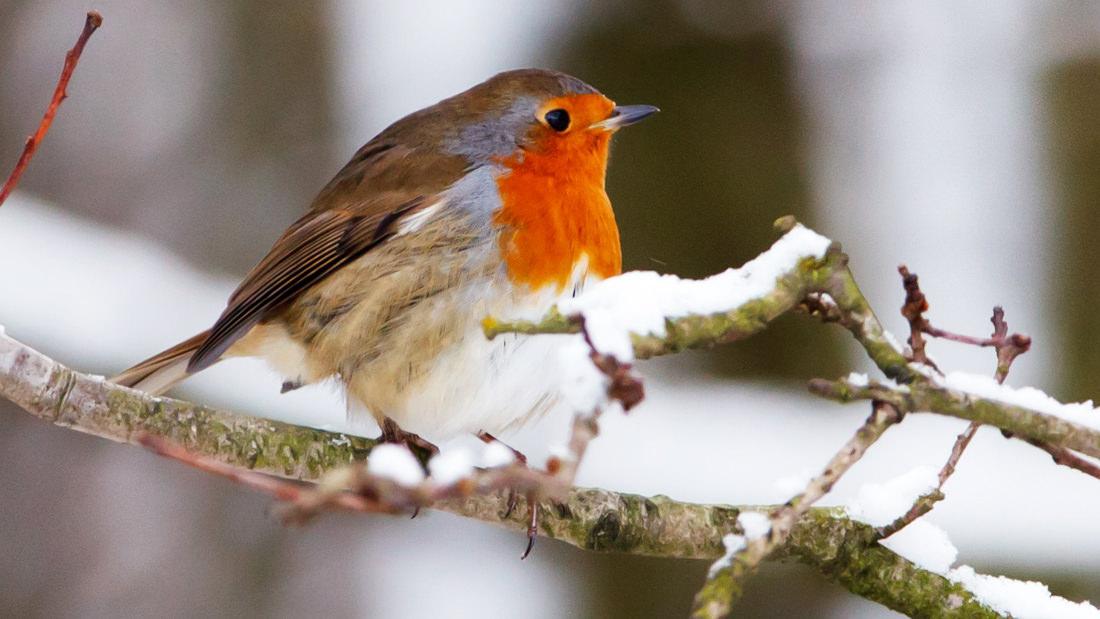 Der LERNORT stellt mit den Kindern Vogelfutter für die Vögel im Winter her