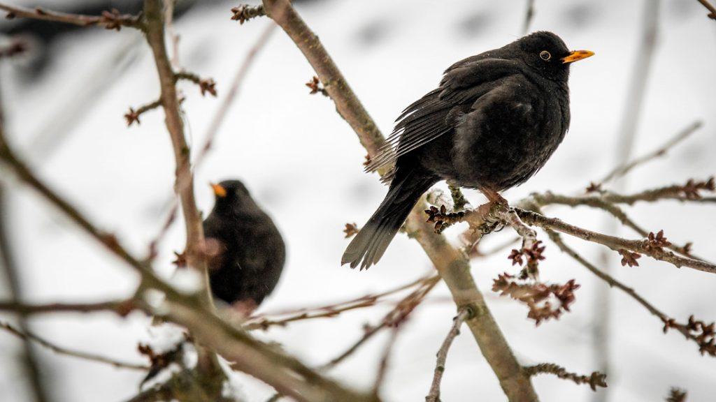 Der LERNORT möchte den Vögeln im Winter etwas Gutes tun.