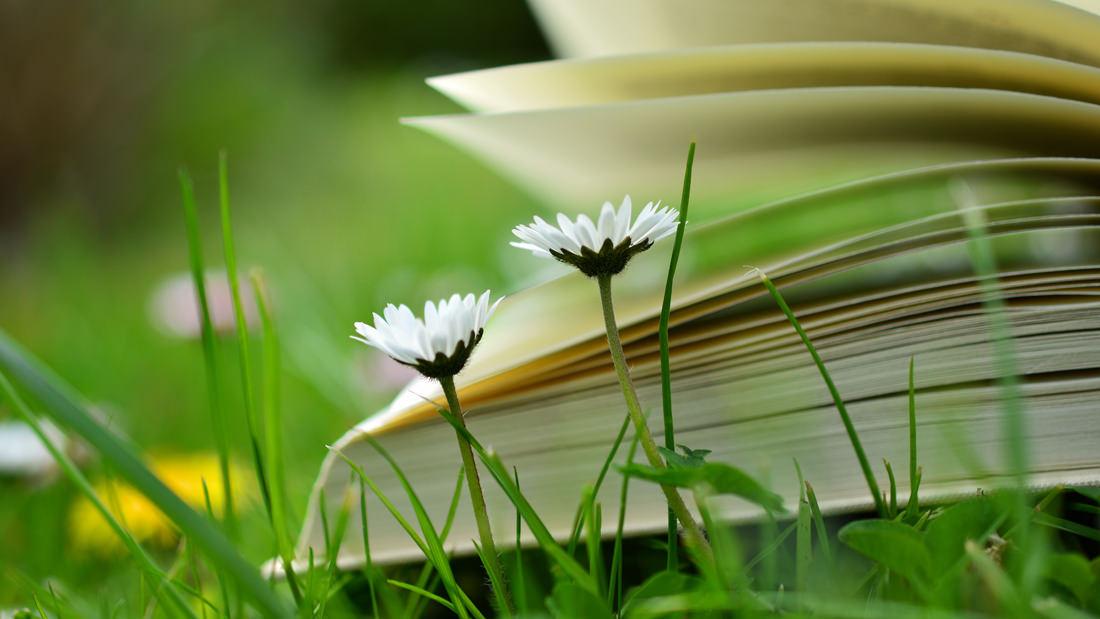 Ein Buch liegt auf einer grünen Wiese