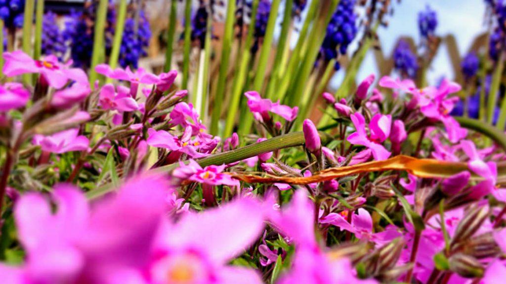 In den Beeten blühen schon die ersten Blumen in voller Farbenpracht