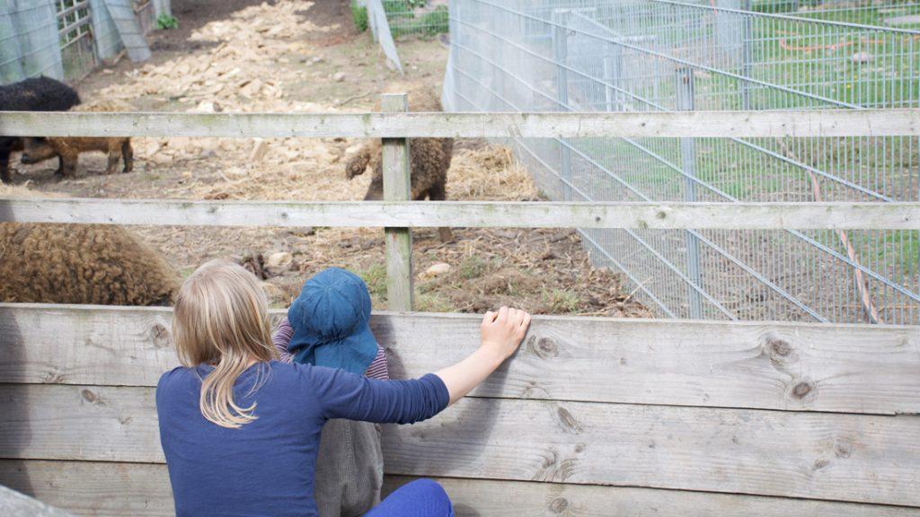 Eine Mutter mit ihrem Kind beobachteten die Schweine im Stall