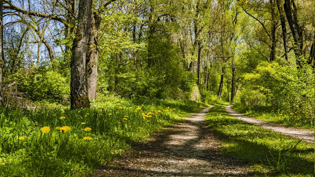 Ein Wanderweg führt durch den Wald