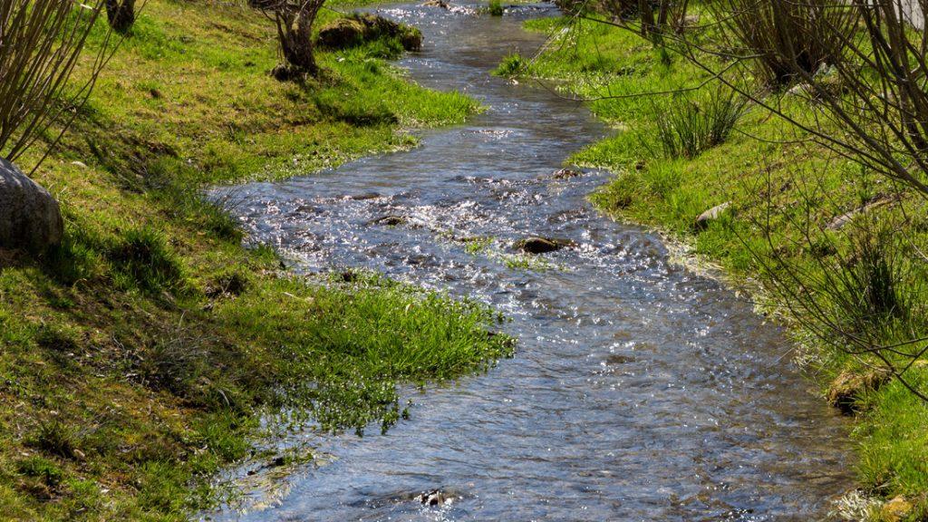 Ein Bach fließt durch die Nieperfitzer Natur