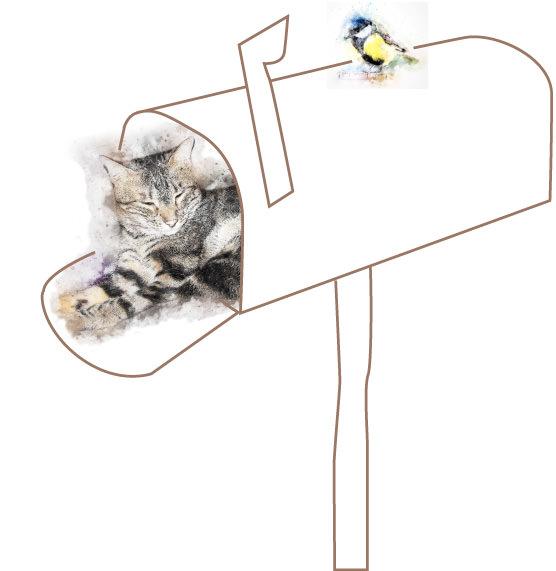 Katze im Briefkasten