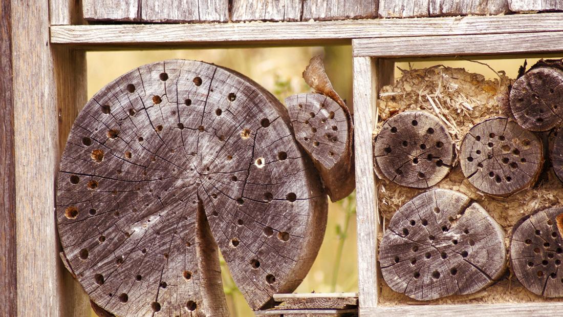 Die einzelnden Abschnitte des Insektenhotels werden entsprechend ausgestattet