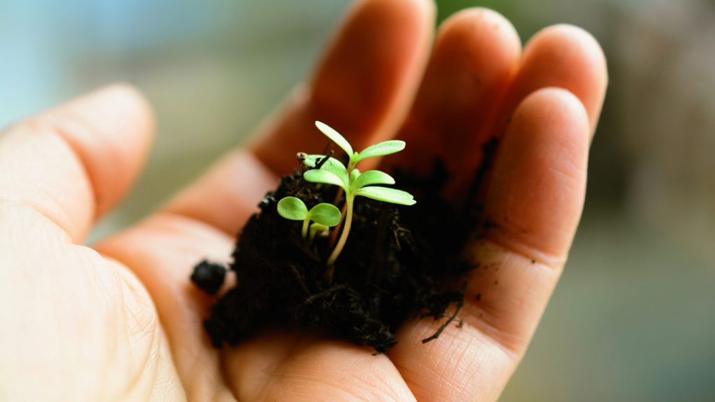 Gemeinsame Frühjahrsarbeiten im Garten und in der Landwirtschaft lassen Neues entstehen