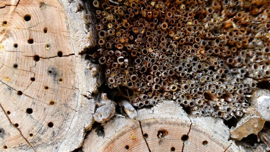 Ein Insektenhotel bietet Platz und schutz für viele Insekten