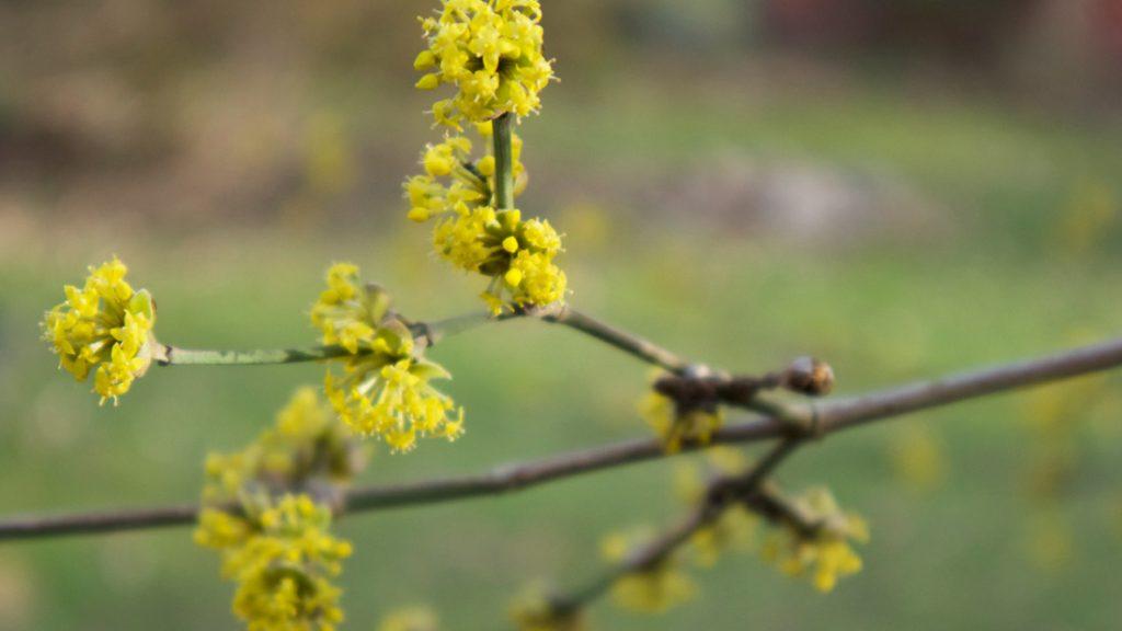 Der Frühling kommt. Die ersten Sträucher blühen am LERNORT